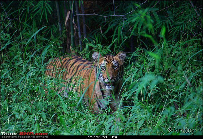 Nobody can assure you a Tiger, and thats the fun of it - Team BHP meet at Tadoba !-_mg_4962.jpg