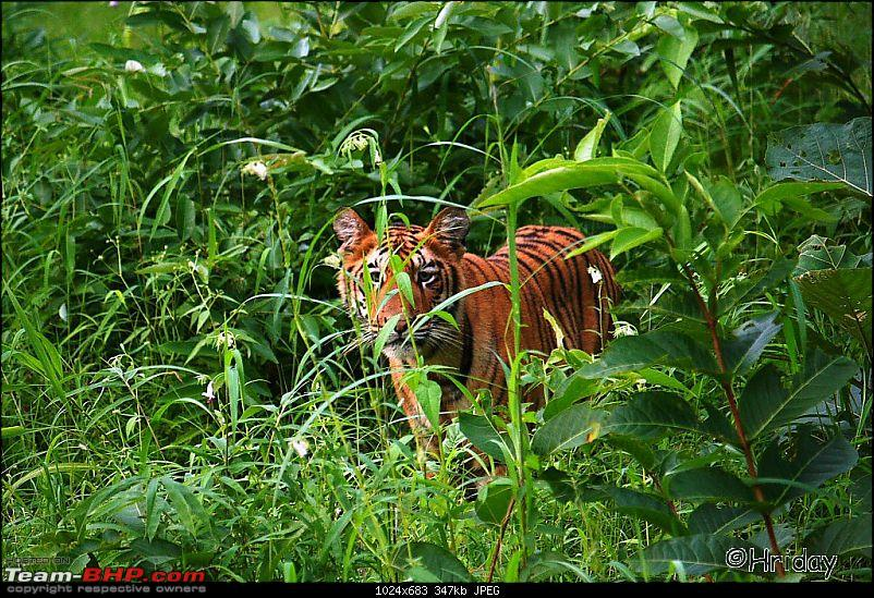 Nobody can assure you a Tiger, and thats the fun of it - Team BHP meet at Tadoba !-_mg_4986.jpg