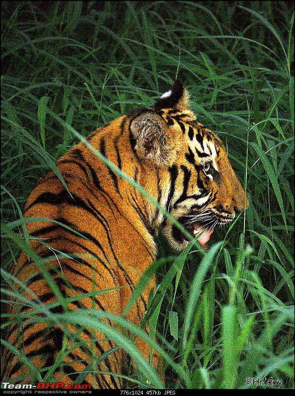 Nobody can assure you a Tiger, and thats the fun of it - Team BHP meet at Tadoba !-_mg_5023.jpg