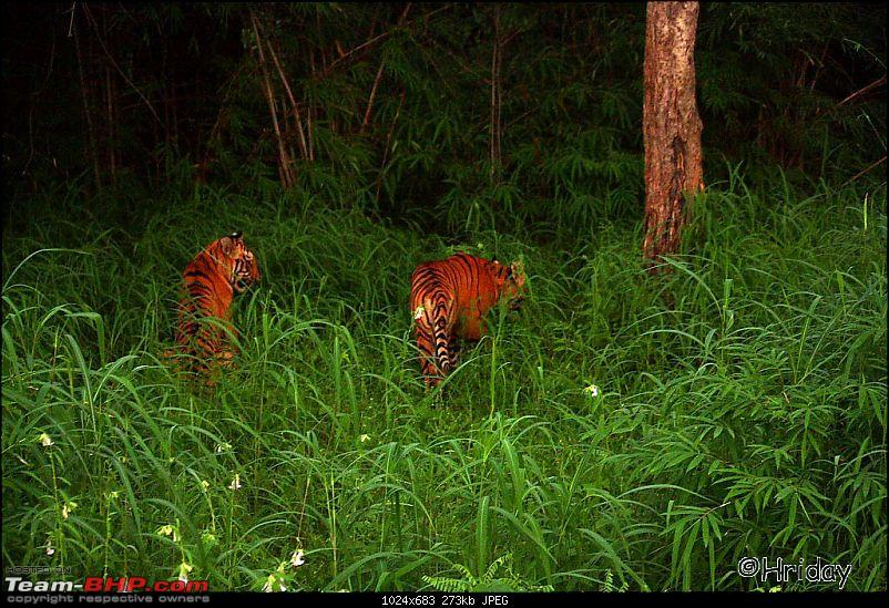 Nobody can assure you a Tiger, and thats the fun of it - Team BHP meet at Tadoba !-_mg_5025.jpg