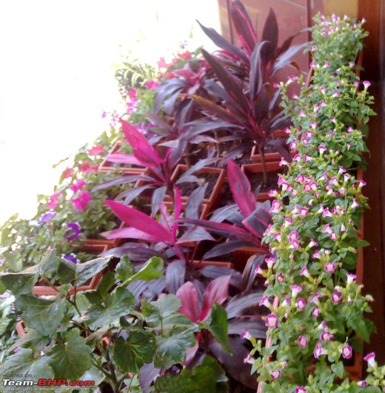 Name:  04 Bonsai Flower valley.jpg Views: 877 Size:  134.2 KB