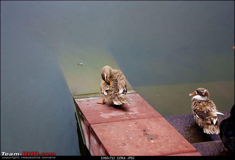 @Mahalaya 2010 - Dakhineshwar Kolkata-4.jpg