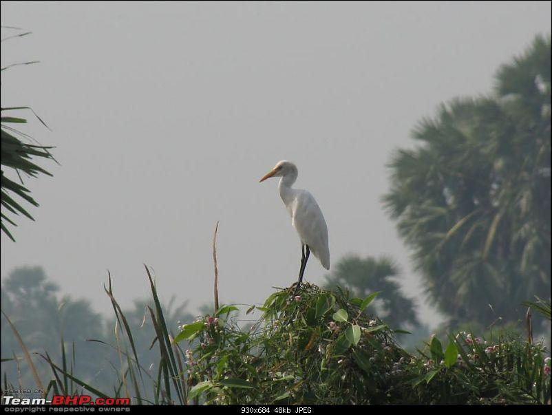 Kolleru lake bird sanctuary - The super sultry avian paradise-1.jpg