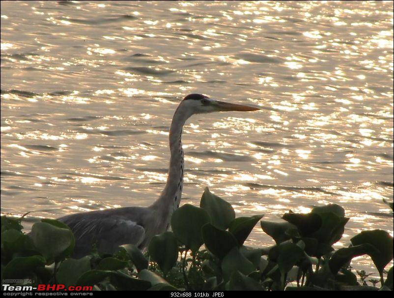 Kolleru lake bird sanctuary - The super sultry avian paradise-3.jpg
