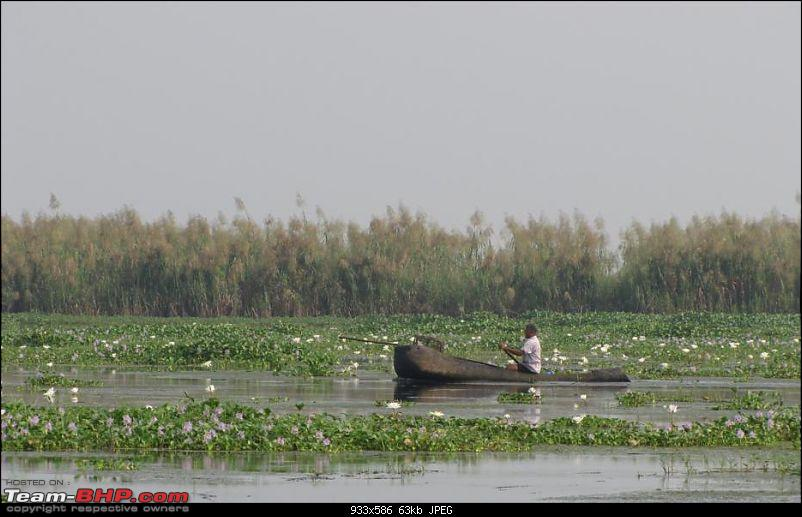 Kolleru lake bird sanctuary - The super sultry avian paradise-12.jpg