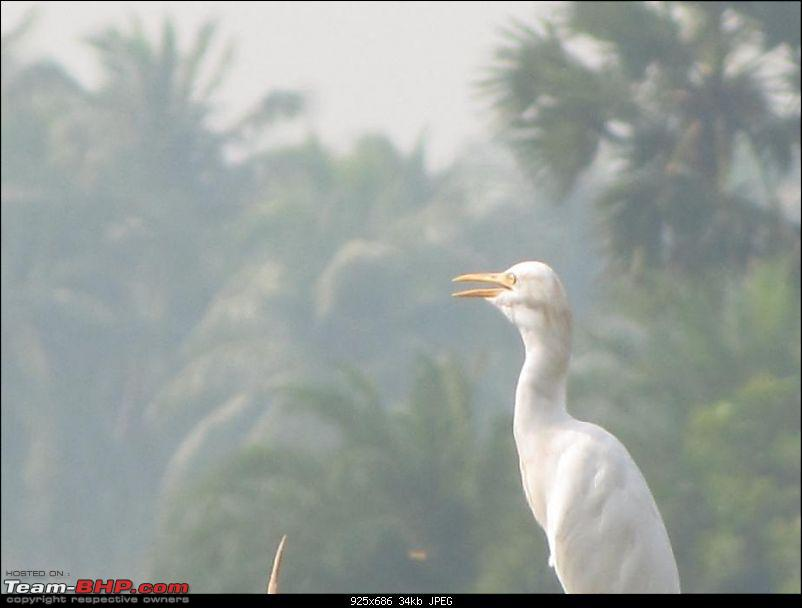 Kolleru lake bird sanctuary - The super sultry avian paradise-4.jpg