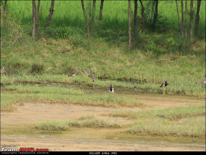 Kolleru lake bird sanctuary - The super sultry avian paradise-6.jpg