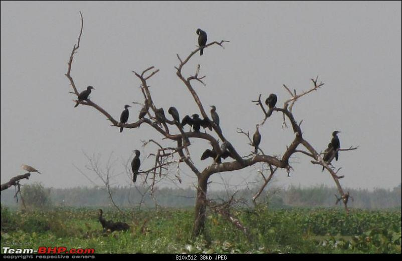 Kolleru lake bird sanctuary - The super sultry avian paradise-20.jpg