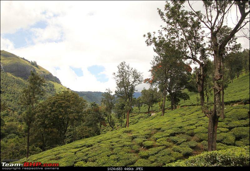 A trip through the lesser known roads of Munnar and Vagamon-img_1271.jpg