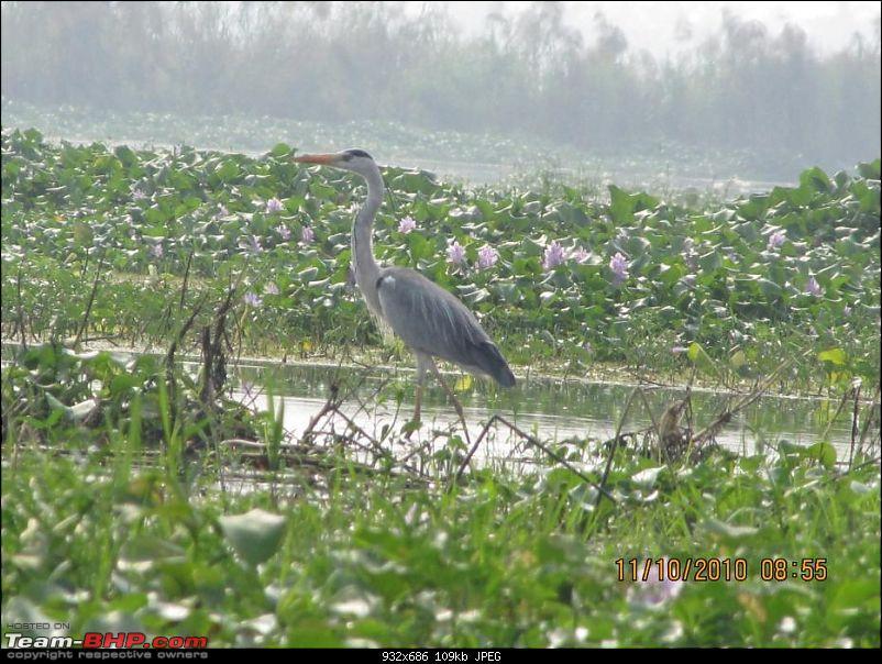 Kolleru lake bird sanctuary - The super sultry avian paradise-32.jpg