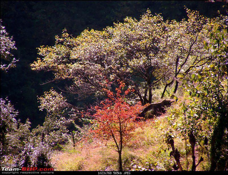 The Great Himalayan National Park : A trek/Photolog-1059081141_uiu5axl.jpg