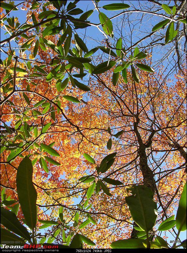 Blue Ridge Parkway - Fall 2010 (A photologue)-dscn9118.jpg