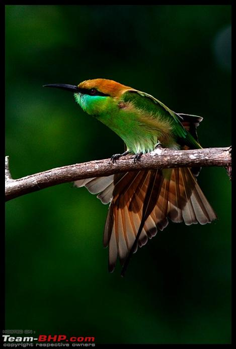 Name:  CR2_Green_BeeEater_FanOut.jpg Views: 3119 Size:  77.8 KB