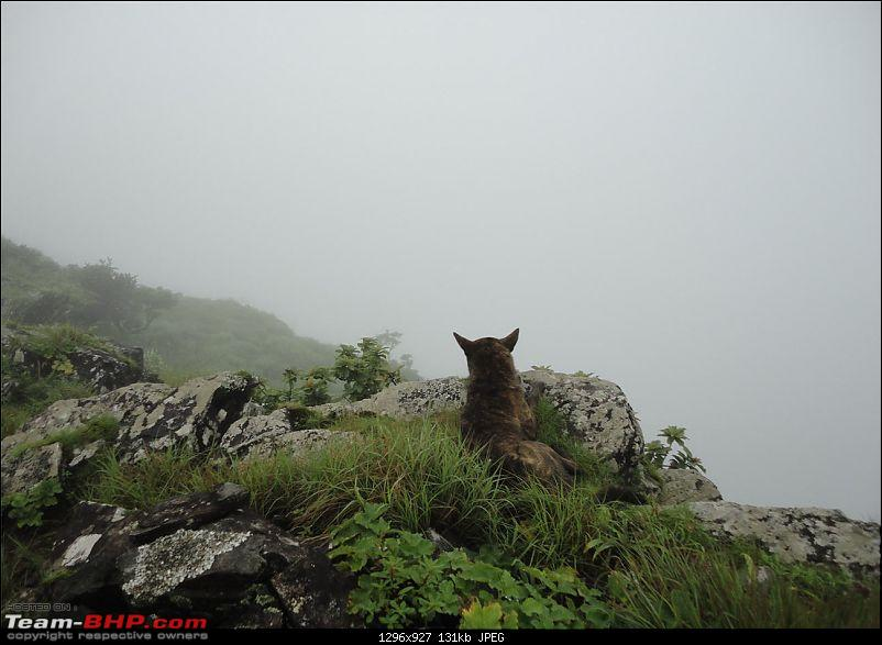 Experiencing the Monsoon - On the Horse Face and on top of KA - A Trekkalog-mbgiri-51.jpg