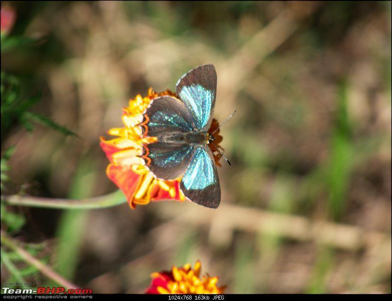 The Great Himalayan National Park : A trek/Photolog-1069000811_np9koxl.jpg