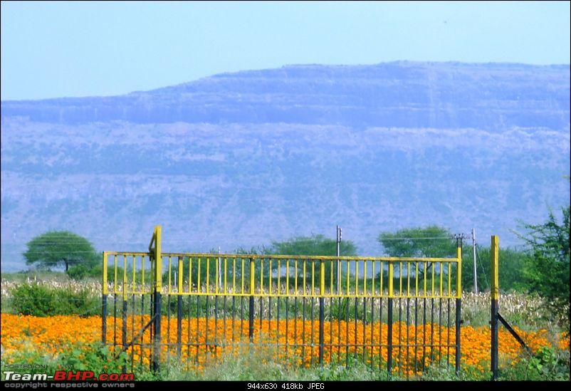 """Pune-Indore-Pune: 2012 Nov trip report on Page 3-marigold.jpg"