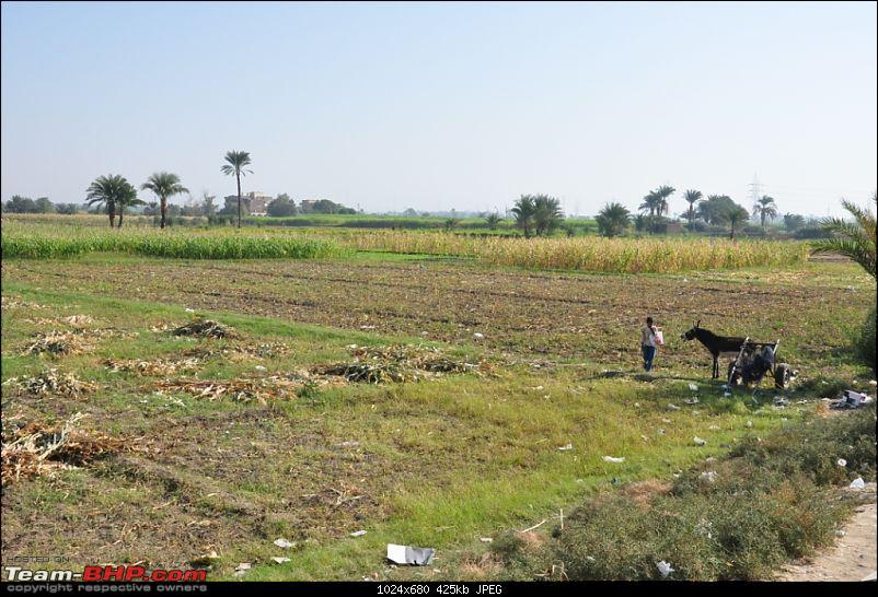 My Egypt Days : Photologue-dsc_1536.jpg