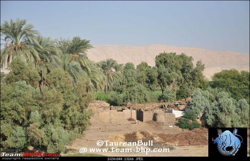 My Egypt Days : Photologue-dsc_1971.jpg