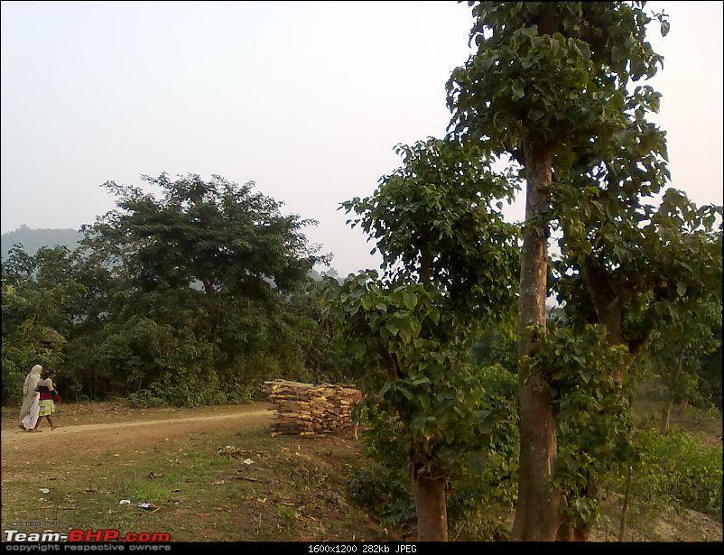 Guwahati getaways: Pobitora-san1370.jpg