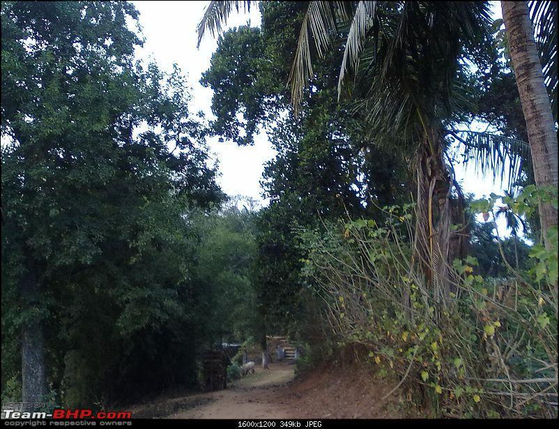 Guwahati getaways: Pobitora-san1372.jpg