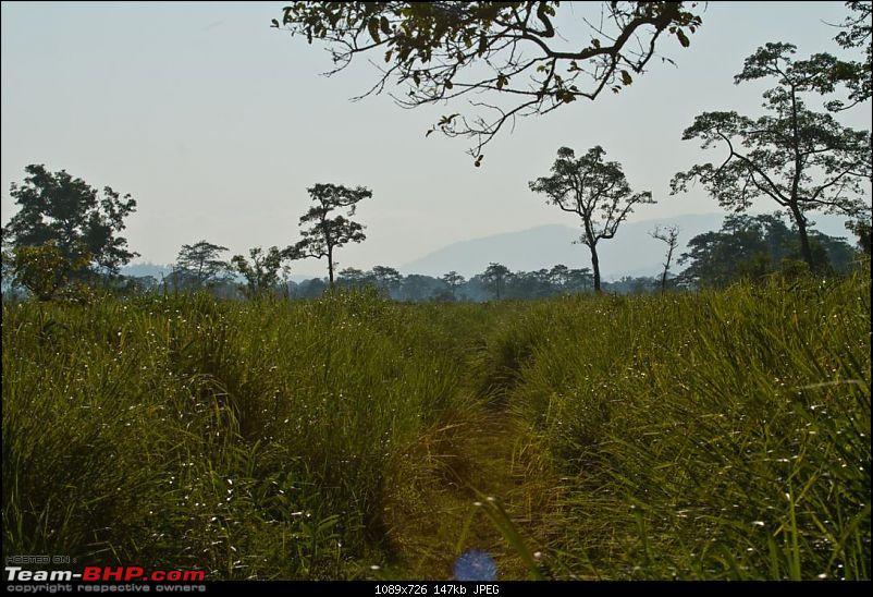Kaziranga-assam-073.jpg