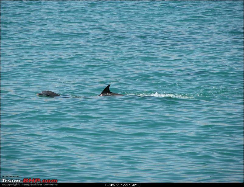 Swim(sail)ing with the Dolphins.-20100226-035-large.jpg