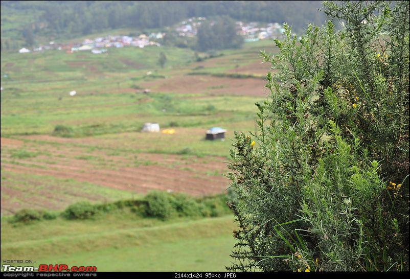 4 days in Ooty � drive from Chennai-dsc_0498.jpg