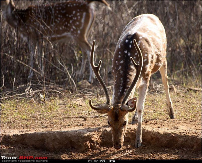 Mission Spot a Tiger @ Sariska - Project Tiger Reserve, Attempt No - 2-img_9772.jpg