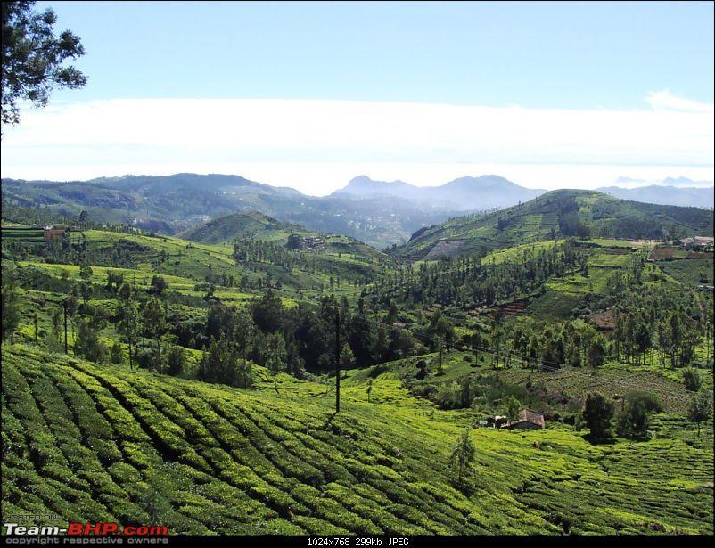 Recent trip to the Nilgiris - in the Scorpio of course.-tea.jpg