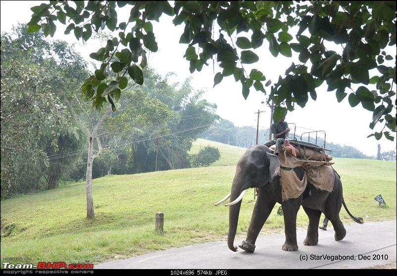 Story of a Vacation II : A page out of Jungle Book & experiencing God's Own Country-114-then-came-elephant.jpg