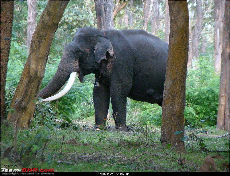 Southern Odyssey : 5000 kms through South India-18-muthanga-tusker-1.jpg