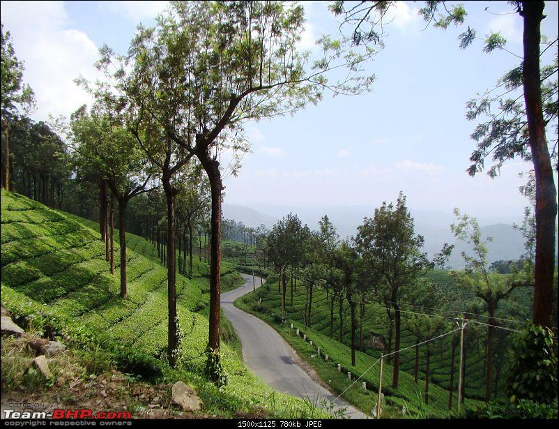 Southern Odyssey : 5000 kms through South India-5-munnar-tea-1.jpg