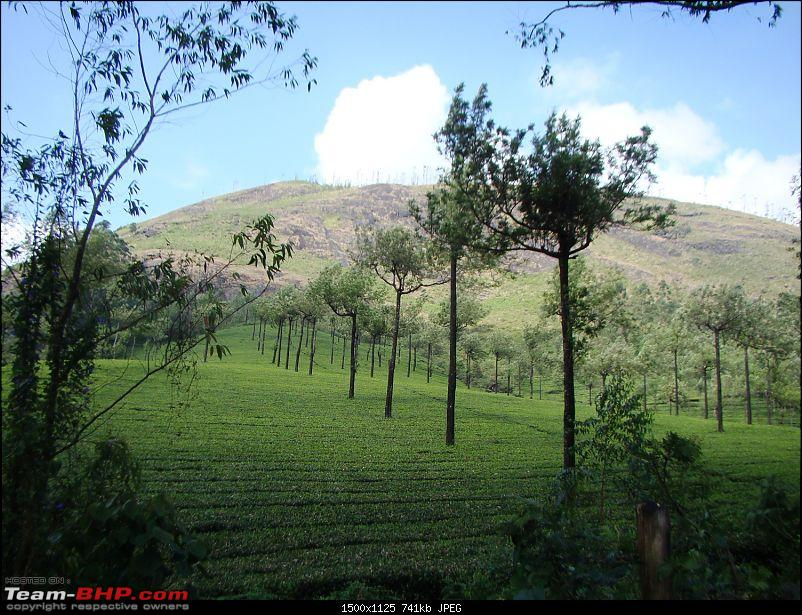 Southern Odyssey : 5000 kms through South India-8-munnar-tea-2.jpg