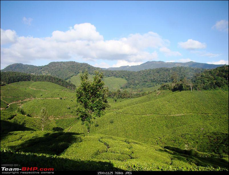 Southern Odyssey : 5000 kms through South India-11-munnar-tea-3.jpg