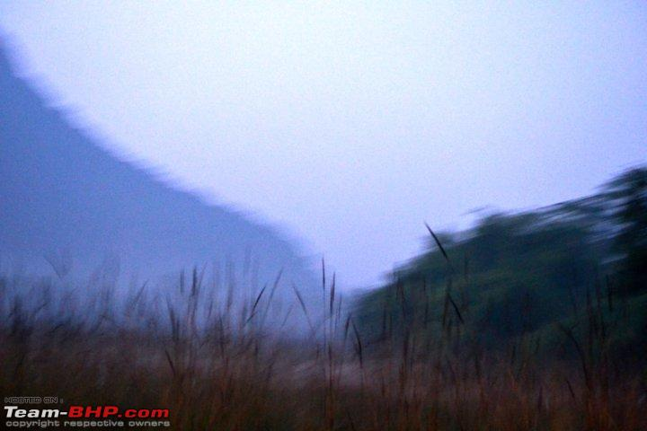 Name:  Early morning wild grass..jpg