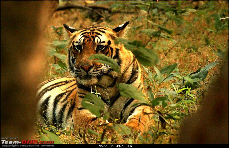 Magical Bandhavgarh : A group visit cum study tour to a high density Tiger reserve-stareimg_3929.jpg