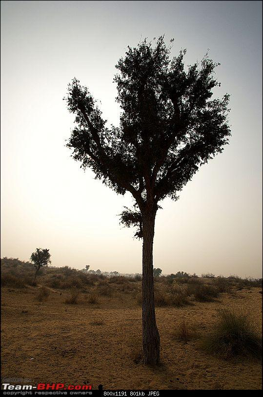 Another Xmas in the Great Indian Desert: This time Bikaner!-giving-us-shade.jpg