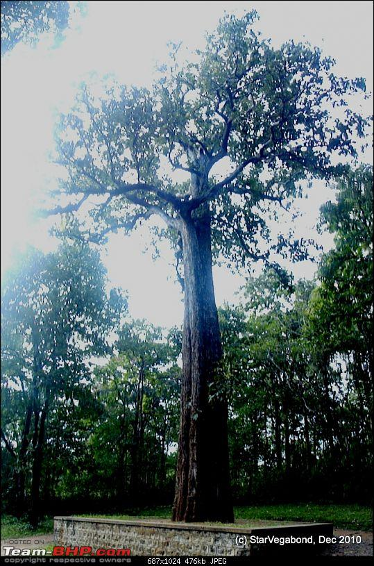 Story of a Vacation II : A page out of Jungle Book & experiencing God's Own Country-157-full-view-kannimara-tree.jpg