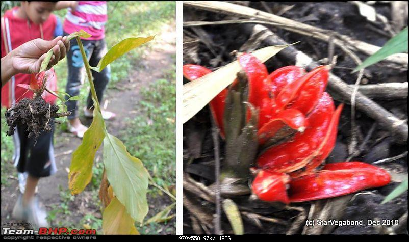 Story of a Vacation II : A page out of Jungle Book & experiencing God's Own Country-290-flower-roots.jpg