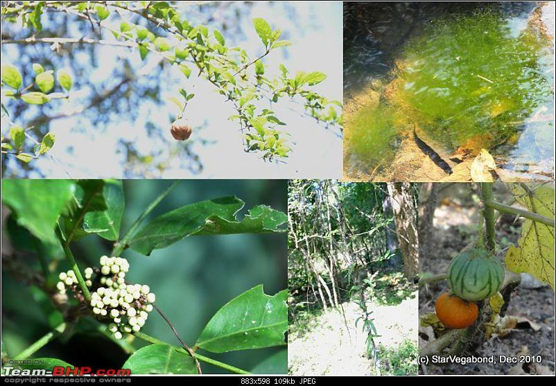 Story of a Vacation II : A page out of Jungle Book & experiencing God's Own Country-297-some-jungle-fauna.jpg