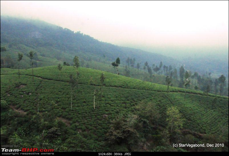 Story of a Vacation II : A page out of Jungle Book &amp; experiencing God's Own Country-446-more-tea-garden.jpg <br /> 447 Truck carrying Tea leaves<br /> <a href=