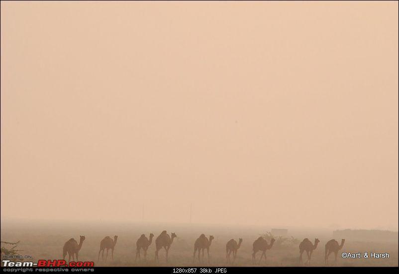 Raiders of the Rann: A Kachchhi Kaleidoscope (Gujarat)-dsc_1651.jpg