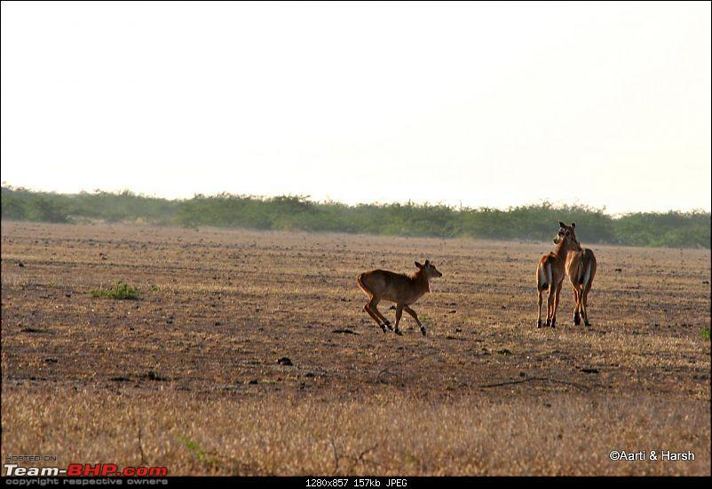 Raiders of the Rann: A Kachchhi Kaleidoscope (Gujarat)-dsc_1158.jpg
