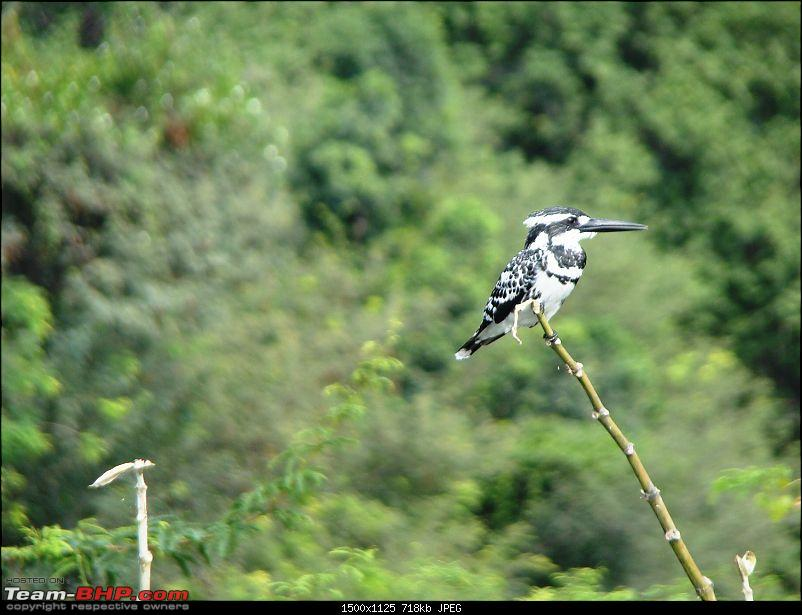 Southern Odyssey : 5000 kms through South India-14-hogenakkal-1-kingfisher.jpg