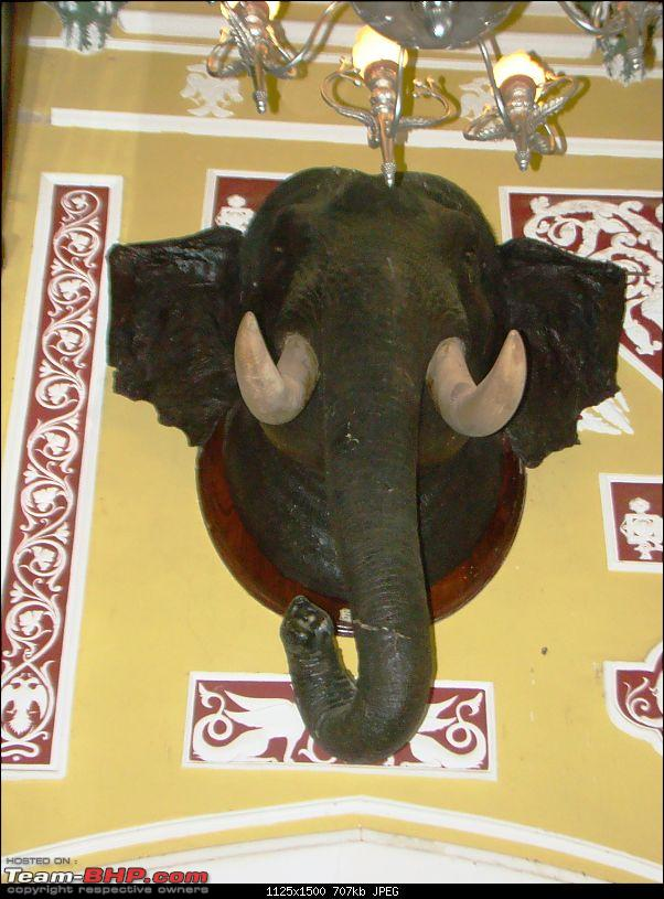 Southern Odyssey : 5000 kms through South India-10-bangalore-palace-elephant-head.jpg