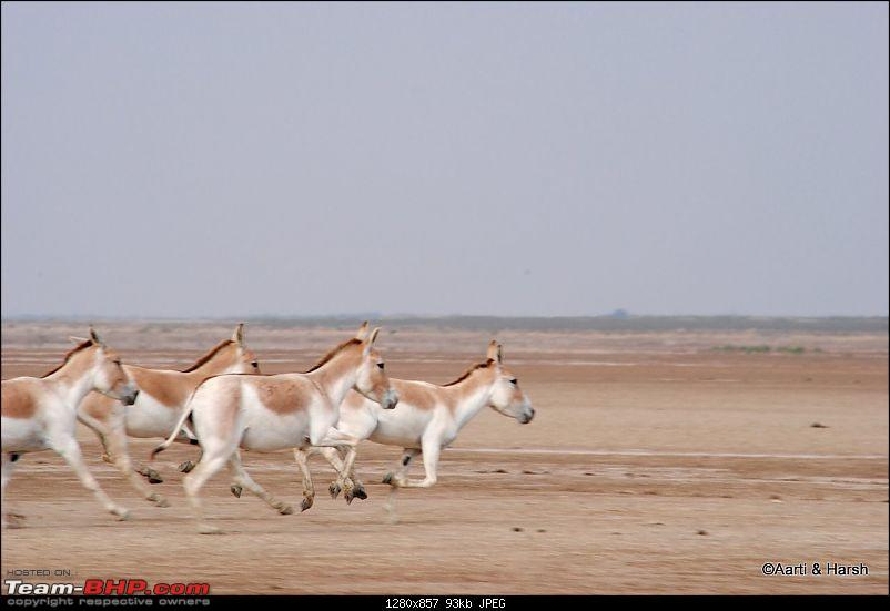 Raiders of the Rann: A Kachchhi Kaleidoscope (Gujarat)-dsc_1362.jpg
