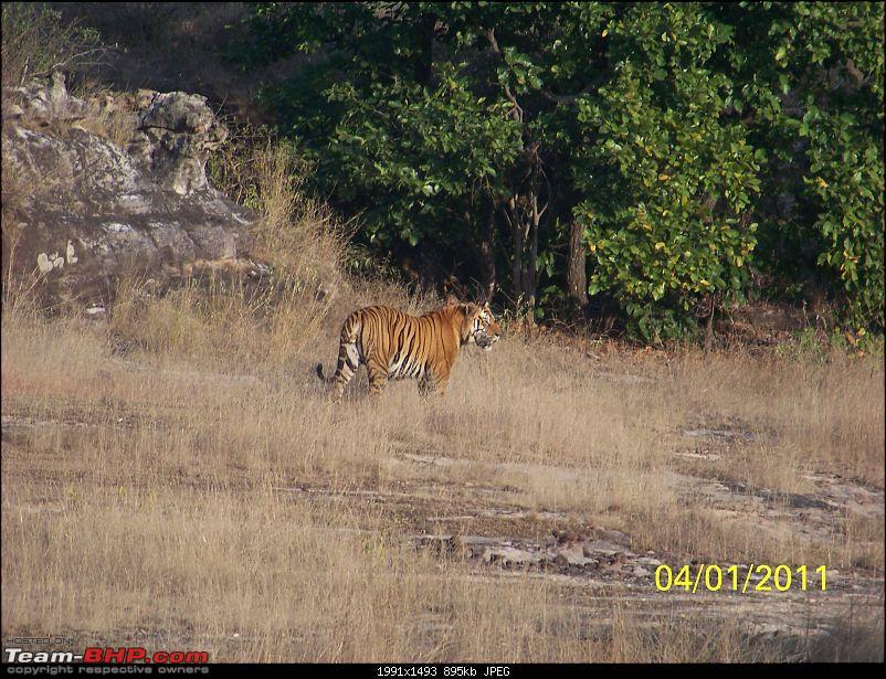 Photolog - Bandhavgarh - Bhedaghat - Birge Dam (Near Jabalpur)-picture-357.jpg