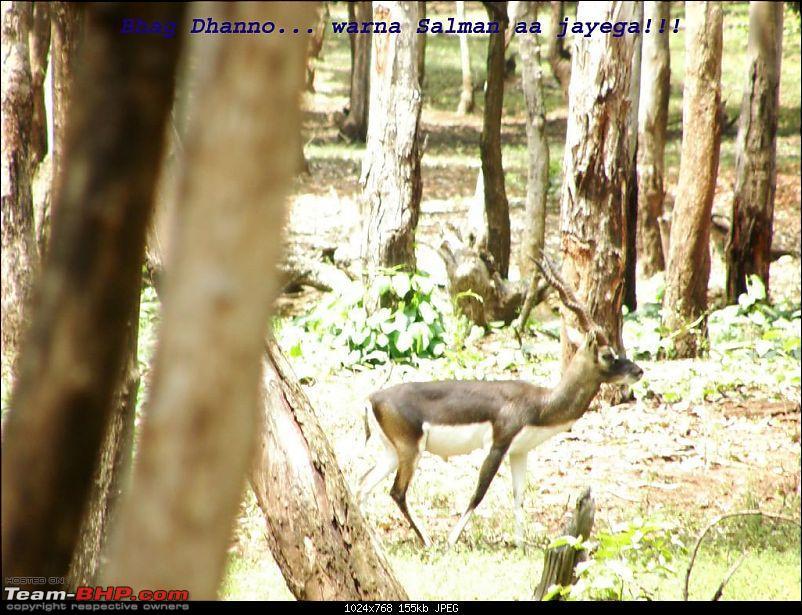 My Trip to Jog falls, Murudeshwar, Maravanthe, Udipi, Kudremukh, Belur ....-p8302904-large.jpg