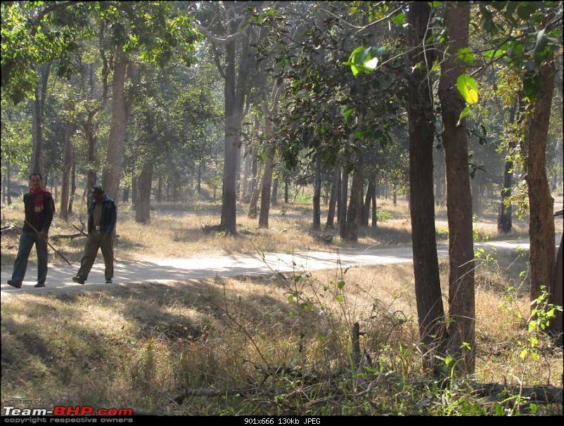 Magical Bandhavgarh : A group visit cum study tour to a high density Tiger reserve-1.jpg