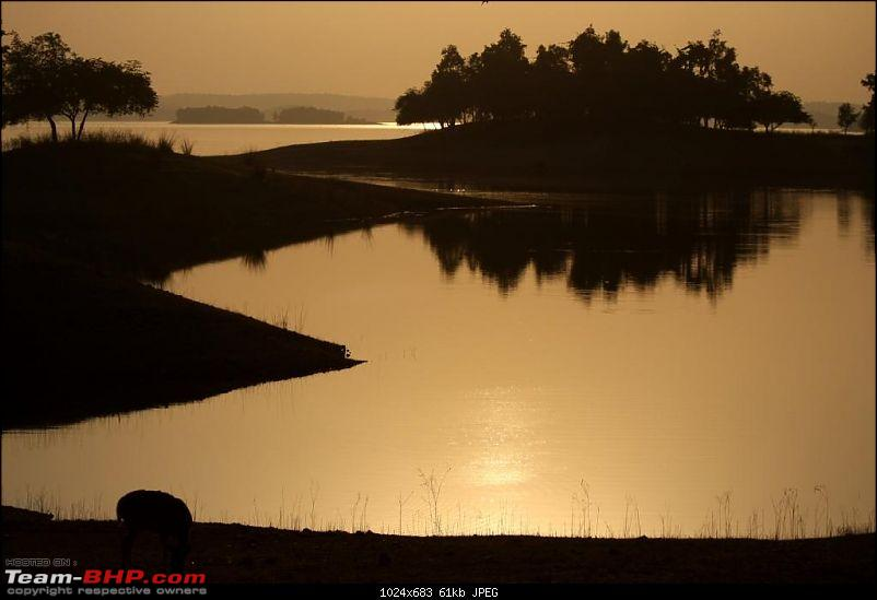 MP Ghazab Hai - Into the heart of Tiger country + Dhuadaar-Bedaghat-img_1022deerscape.jpg